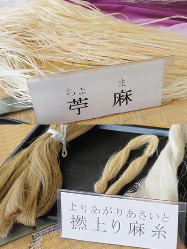 【 苧麻(ちょま)】 【 撚(より)上がり麻糸】 原料の苧麻と撚り上がった麻糸を見せていただきました。