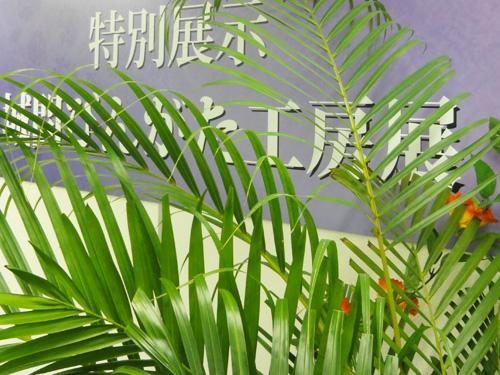 沖縄をイメージした特設展示ブース。 会場には沖縄の温かい雰囲気が漂います。